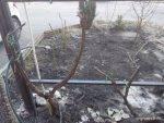 Подрезка винограда весна 2015