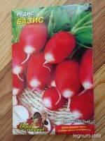 Садим зеленушку на салат
