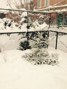 Снегопад 17 января 2016