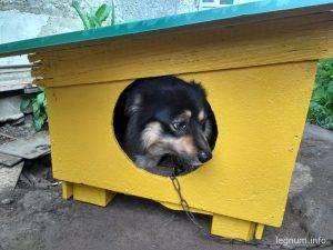 Будочка для нашего пса