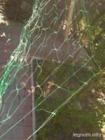 Натягиваем сетку для подвязки огурцов