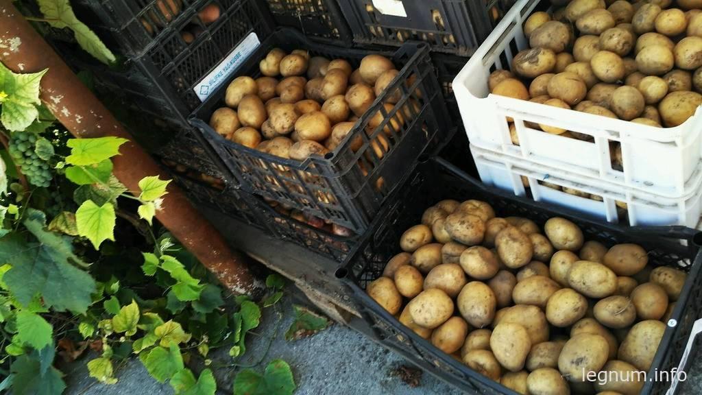 Уборка картошки в августе