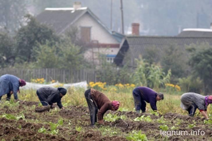 Как быстро выкопать картошку