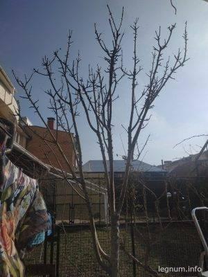 Садовая обрезка весной 2019