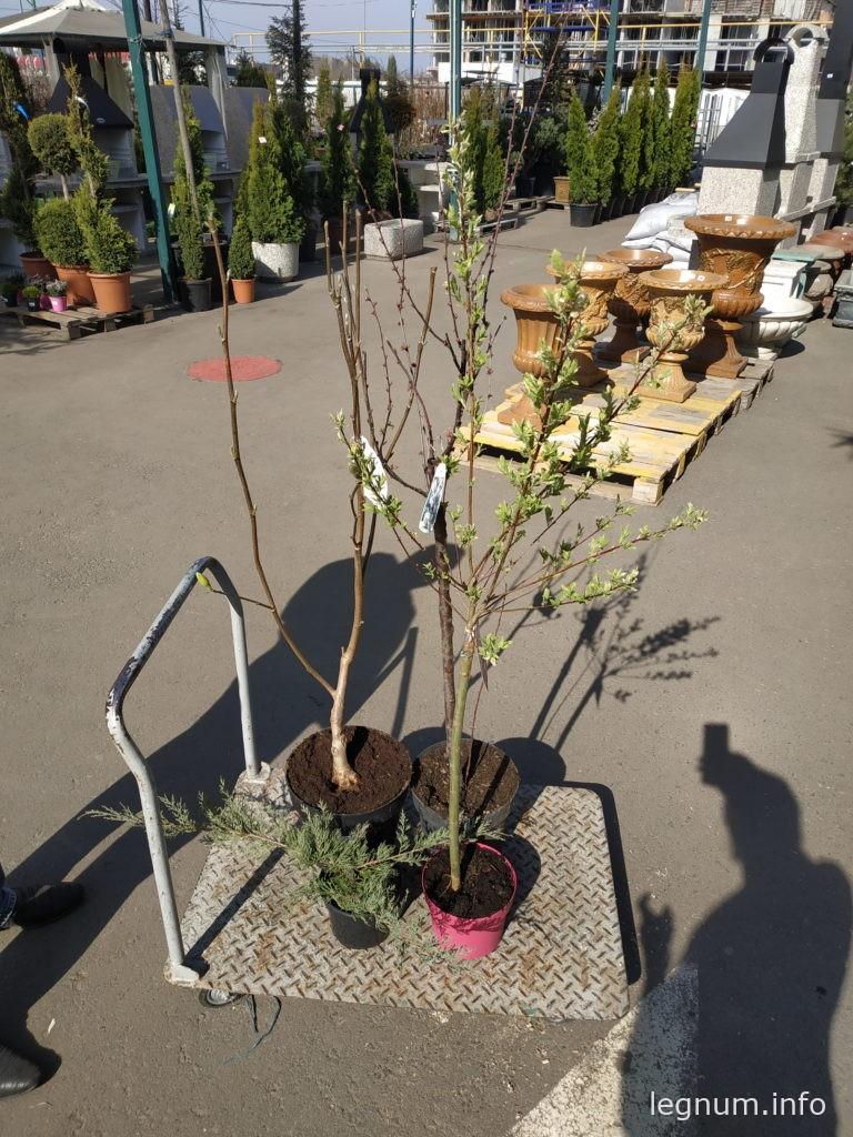 Немного декоративных деревьев