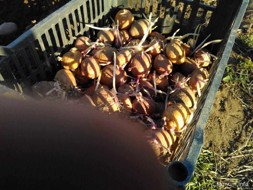 Как мы картошку садили в селе