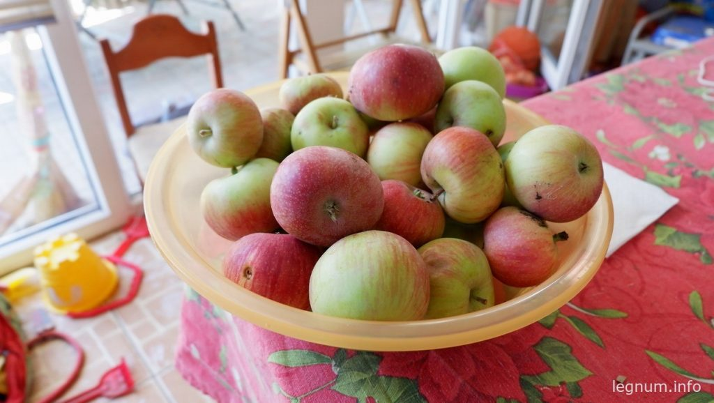 Сушка из яблок - быстро и вкусно